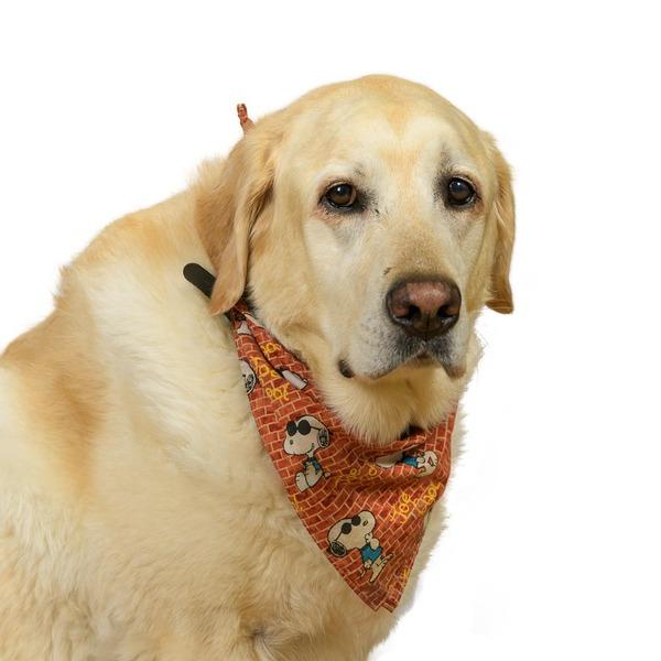 "Rocky ""The Big Yellow Dog"""